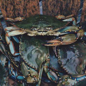 krabben in Schweden